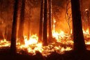 U.S. Forest Service handout photo shows the Rim Fire burning at night near Yosemite National Park, California