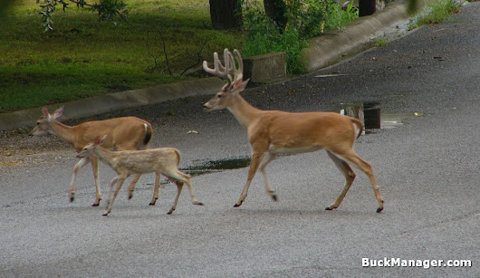Staten Island Deer Population: Control to Fall Short | Buck Manager