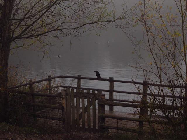 Highgate No 1 Pond in the Mist