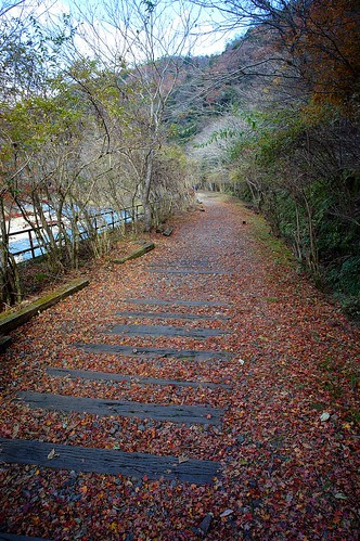 Autumn leaves and waste line