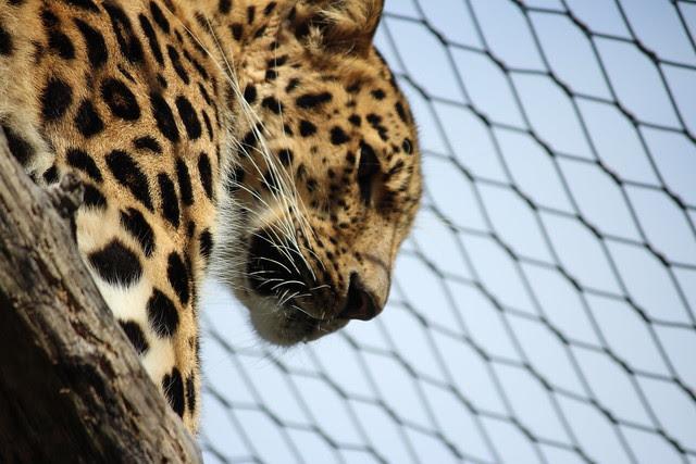 Zoo fun 034