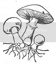 Scan_Pic0113.jpg toadstool_clipart picture by sarahjmorriss
