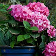 Garden Centre | Buy Garden Plants Online