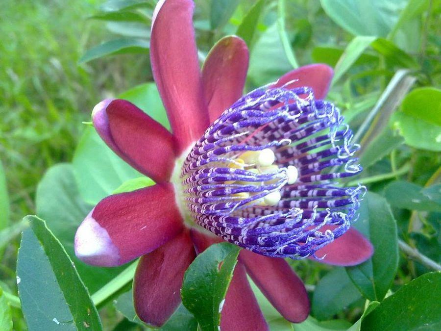 Miren Que Belleza Las Fotos De Flores Mas Bonitas Plantas