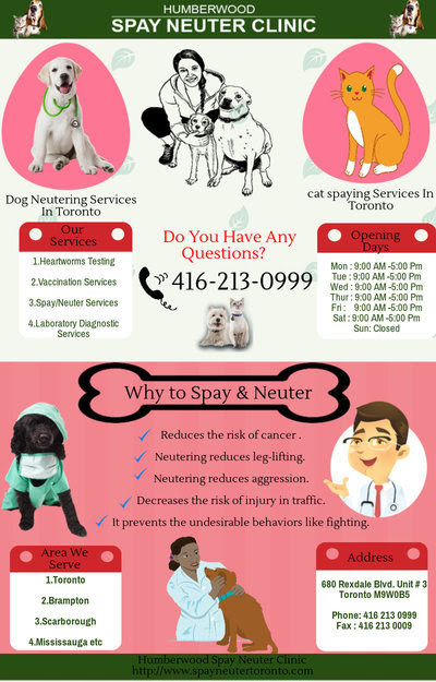 Truth About Spay/Neuter Animal Clinic Toronto