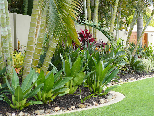 Landscaping Tips for A New Home | Cairns Builders | Townsville Builders | Allaro Custom Homes