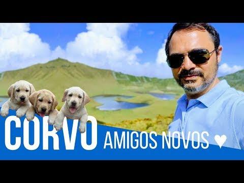CORVO - Fiz amigos novos ♥