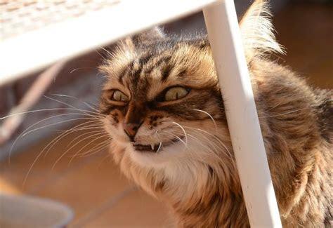 tampang aneh kucing  bikin kita gak gemes  ama doi