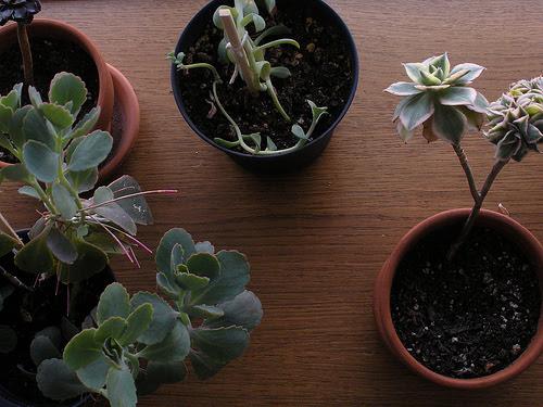 Plant Pets II