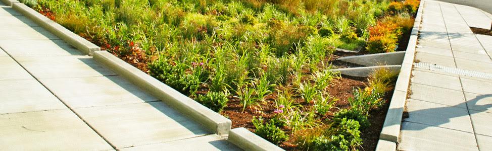 banner stormwater bioretention