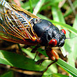 Spring Warmup Brings Cicadas, Frogs and Worms