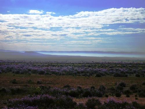 Travessant terres desèrtiques