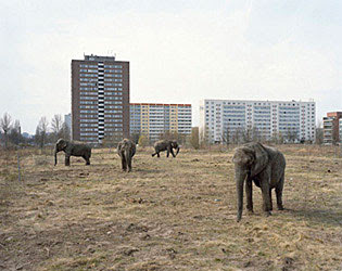 MitchEpsteinElephantsBerlin