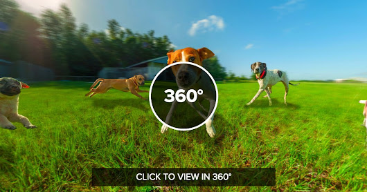 360° VR is perfect for immersing audiences in your story.  Meet a few of the dogs from Williston Animal Group (WAG).  The WAG is dedicated to improving the lives of companion animals and to finding permanent, loving homes for the cats and dogs in their care. They provide a safe haven for animals in transition, serve as advocates for animals, and work to end animal overpopulation.  http://www.willistonanimalgroup.com/If your businesses has products that you want to put in front of your customers, contact us today for a free quote!!  We look forward to learning more about your business and giving you a visual tool to immerse all of your customers in.  352-229-8477    Want to hear the dogs...?  Go to http://tridentglobalimaging.com/wag/pup_circle.html  #dog #shelter #360VR