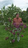 Little Lilac bush