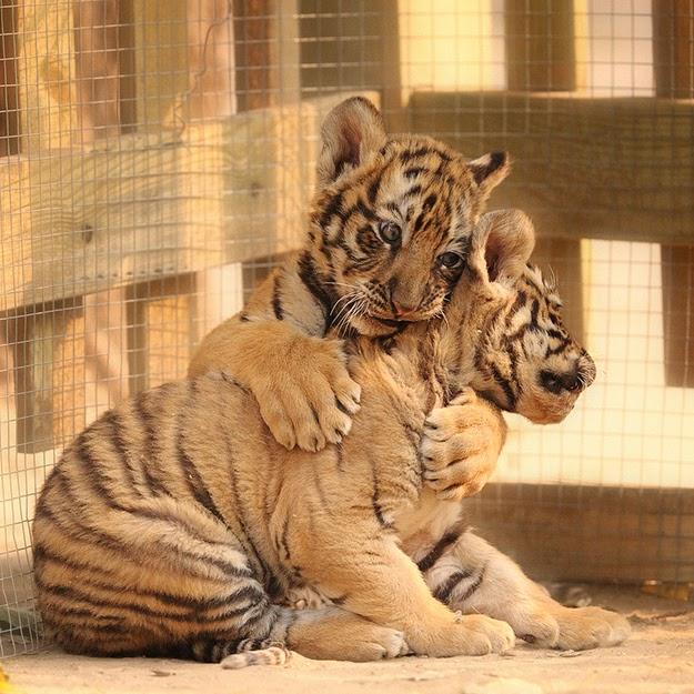 15+1 ζώα που ξέρουν καλά τι θα πει αγάπη!