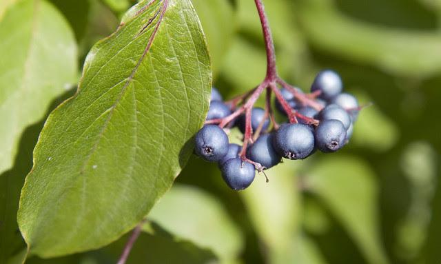 uxbridge berriess