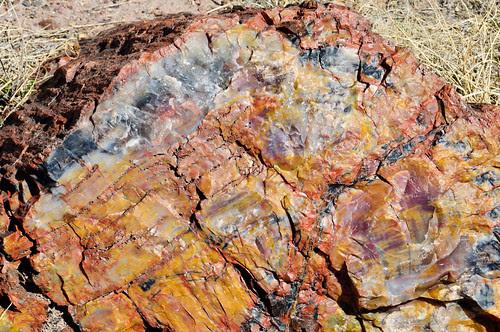 Petrified Forest AZ 16Mar2012 a_6517 by 2HPix.com - Henry Huey