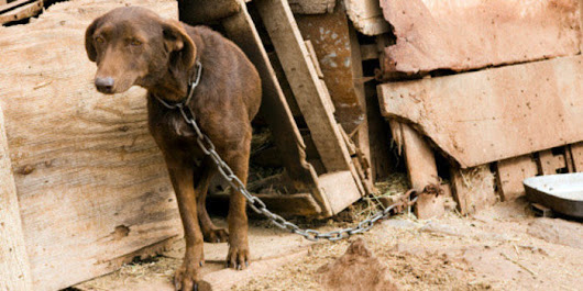 Petition: Harsher Punishments for Animal Abusers