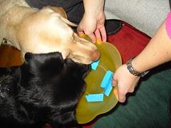 dog eats winner?