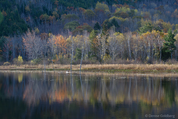 trees reflecting, colors just past peak, Acadia National Park