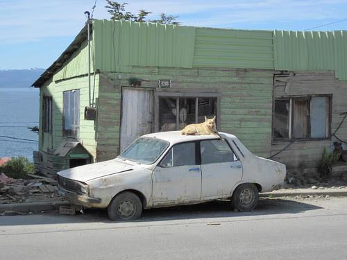 Ushuaia dog