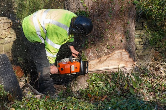 Guidelines For Finding The Best Chainsaws - IKnowTheBest