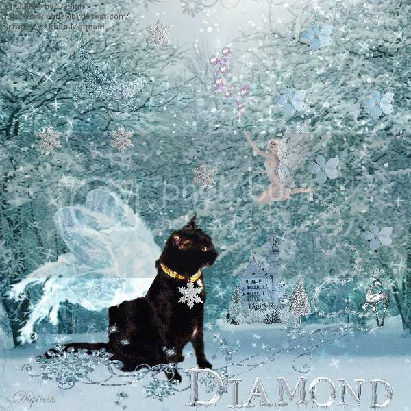 Winter,Fairy,Fantasy,Miss Diamond,House Panther,Domestic Cat,Cute Cat