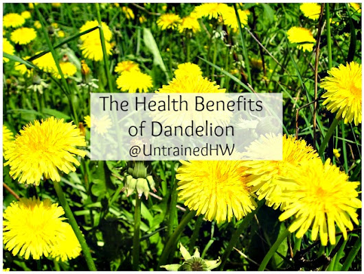 Dandelion: Uses and Health Benefits