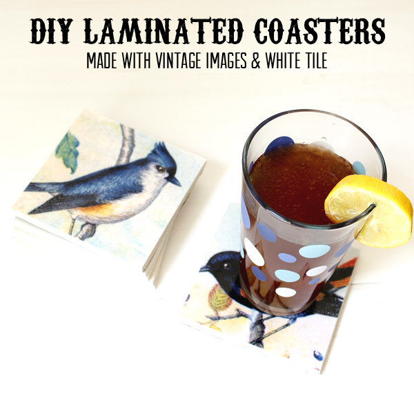 BirdCoasters-10