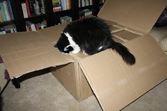 Josie and the big box