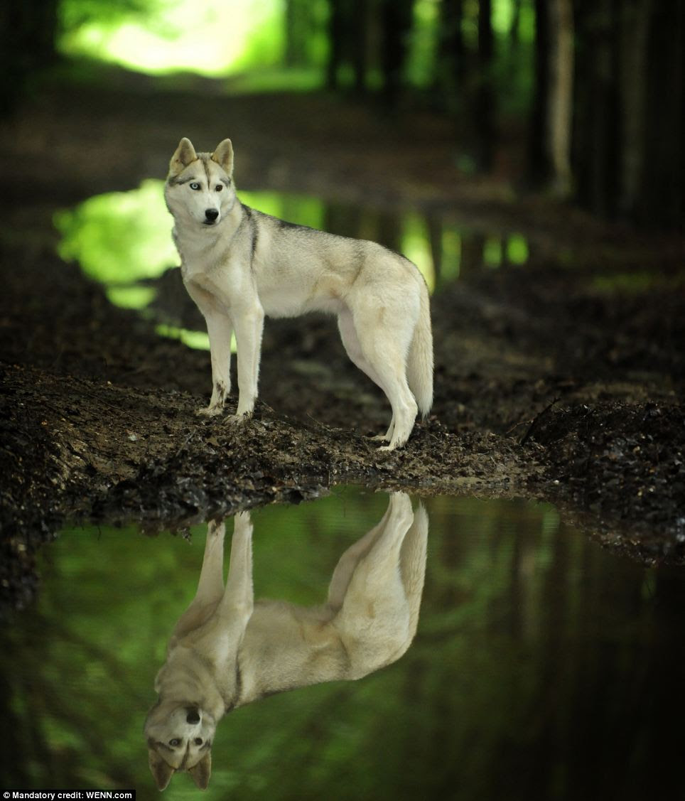 Reflections in the forest: Winner in the Dog Portrait category, taken by Shane Wilkinson