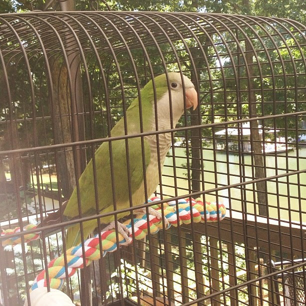 Perfect day for the outdoor cage #parrot #lovethisweather