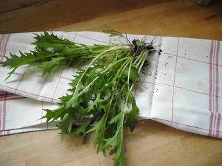 My 1st harvested salad