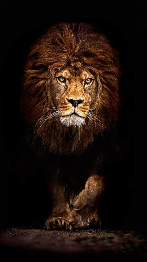 Mufasa Lion Best New Samsung Galaxy A3 Wallpaper