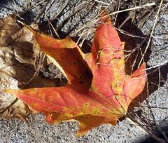 Leaves1007