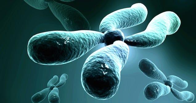 Nueva técnica revierte en décadas el envejecimiento celular humano