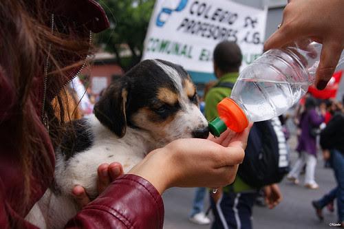 Salvadoras en la protesta by Alejandro Bonilla