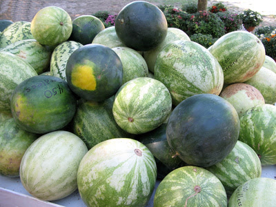 Stages Of Watermelon Plants