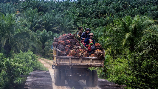 The human cost of palm oil production in Myanmar