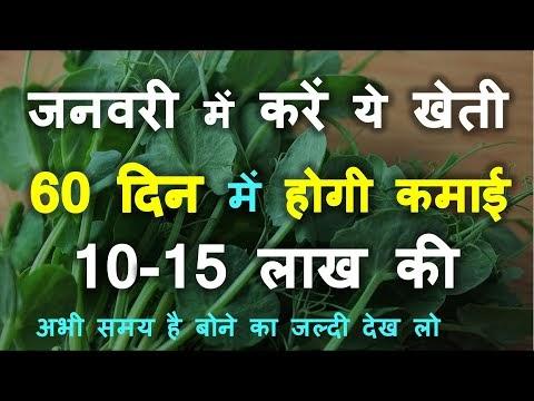 दिसम्बर में करें ये जैविक खेती 60 दिन में होगी कमाई 10-15 लाख की |Matar ...