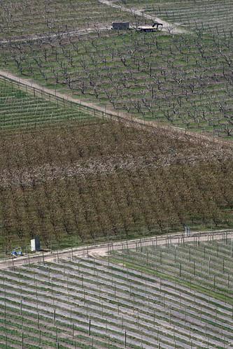 orchards-zigzag