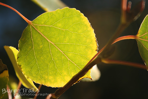 fall colors-3