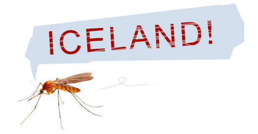 Europe's Mosquito-Free Island Paradise: Iceland - The New York Times