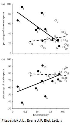 inbreeding and poor sperm graph