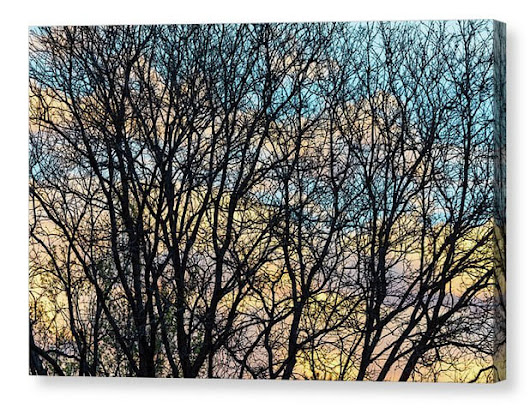 Colorful Clouds Through Tree Branches - Colorado Nature Art