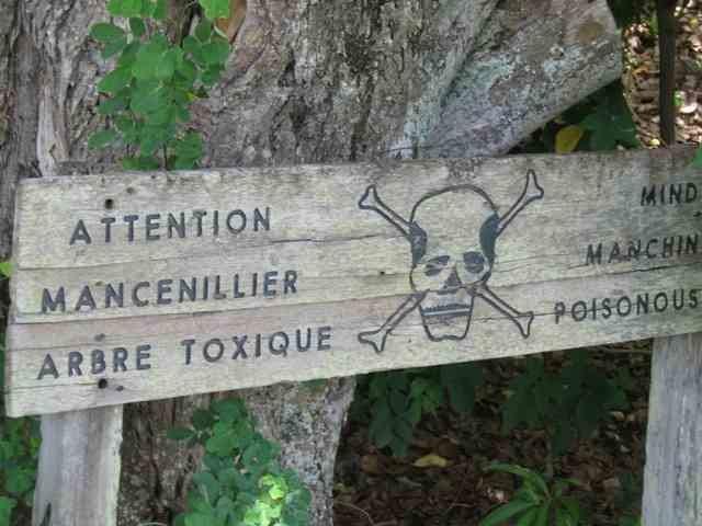 """Résultat de recherche d'images pour """"Le mancenillier, l'arbre le plus dangereux du monde"""""""