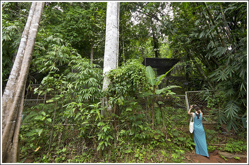 Gibbon Rehabilitation Center in Phuket