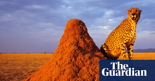 A giant crawling brain: the jaw-dropping world of termites | News | The Guardian