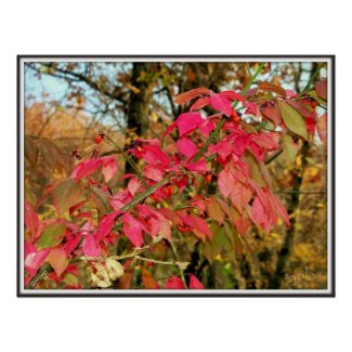 Red Leaves of Autumn Poster